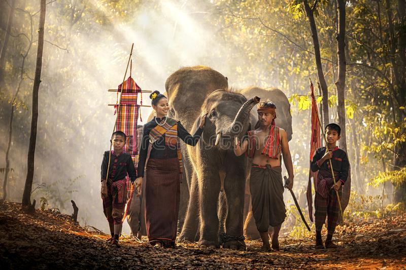 Elephant mahout portrait. Wild elephant ritual ceremony of Surin people. The Kuy Kui People of Thailand. The mahout and the. Elephant at surin, Thailand royalty free stock image