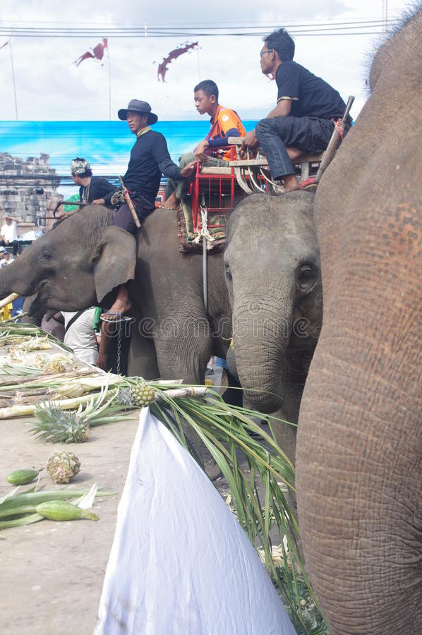 The elephant morning banquet royalty free stock image