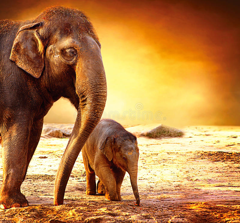 Elephant Mother with Baby. Elephant Mother and Baby outdoors over Sunset stock image