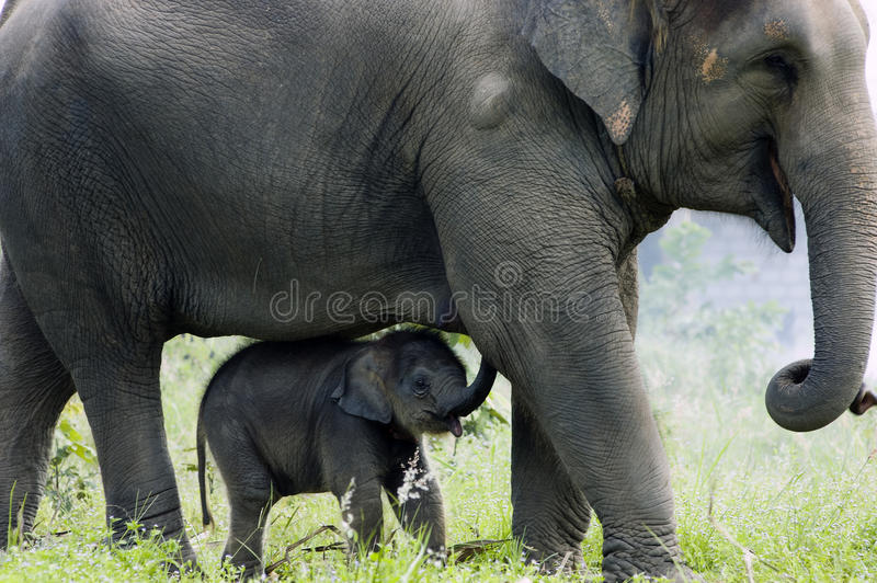 Elephant: mother and child's love stock photo