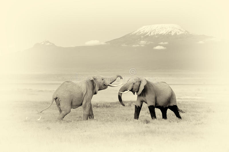 Elephant with Mount Kilimanjaro. Vintage effect. Elephant with Mount Kilimanjaro in the background. Vintage effect stock image
