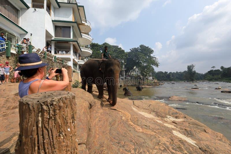 Elephant orphanage of Pinnawala in Sri Lanka royalty free stock photos