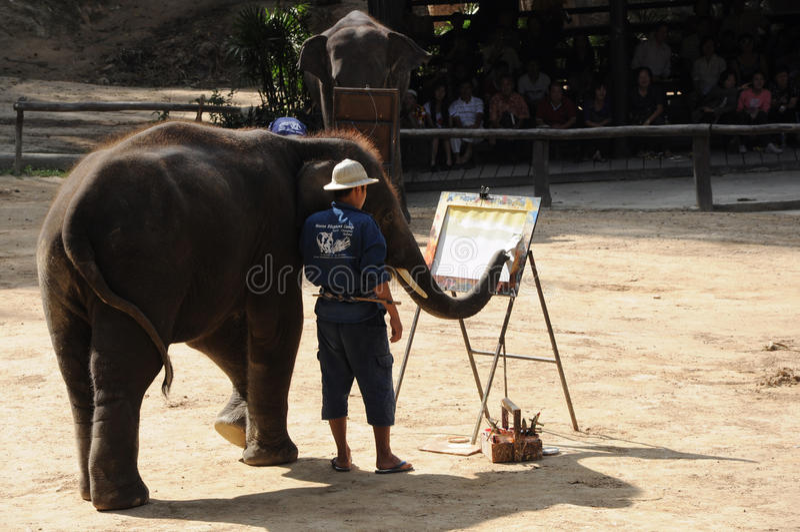 Elephant painting show at Maesa elephant camp. Elephant was painting show at Maesa elephant camp, Mae rim district Chiang mai, Thailand stock photo
