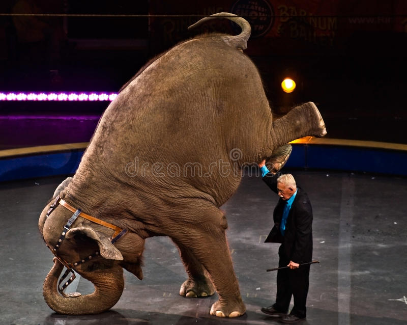 Elephant Perfomance at Circus royalty free stock photos