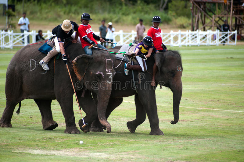 Elephant polo game. HUA HIN, THAILAND -SEPTEMBER 8: Unidentified polo players play in elephant polo games during the 2011 King's Cup Elephant Polo match on stock photo