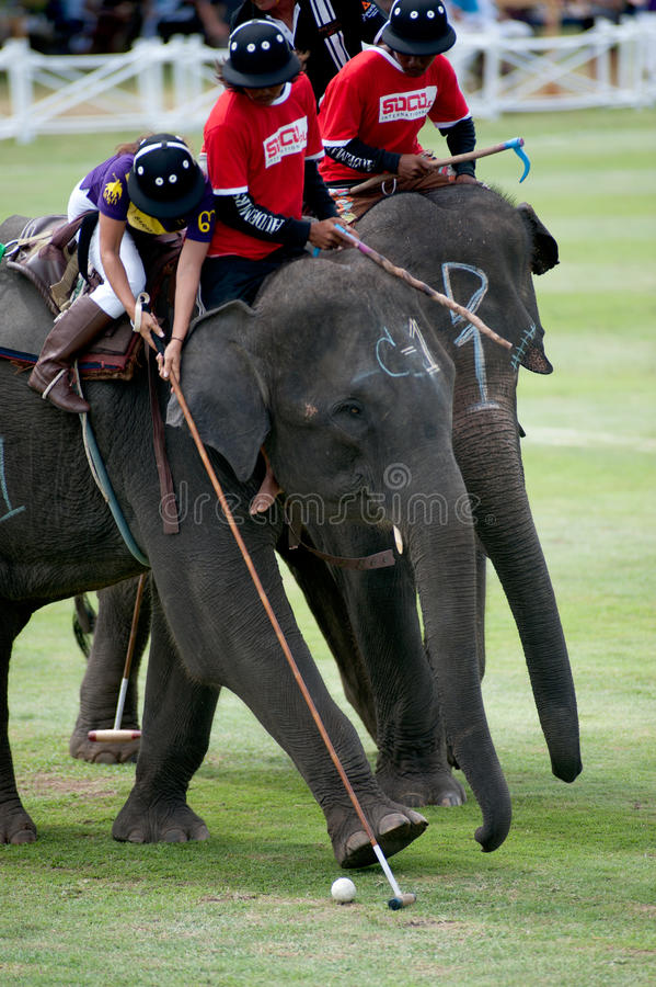 Elephant polo game. HUA HIN, THAILAND -SEPTEMBER 8: Unidentified polo players play in elephant polo games during the 2011 King's Cup Elephant Polo match on stock photography