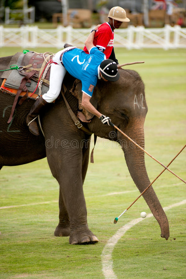 Elephant polo game. HUA HIN, THAILAND -SEPTEMBER 8: Unidentified polo players play in elephant polo games during the 2011 King's Cup Elephant Polo match on royalty free stock image