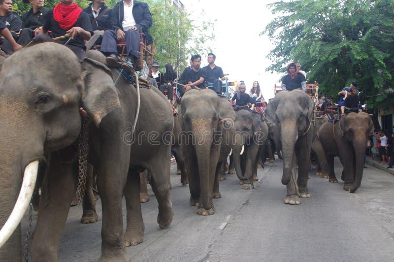 Elephant procession stock image