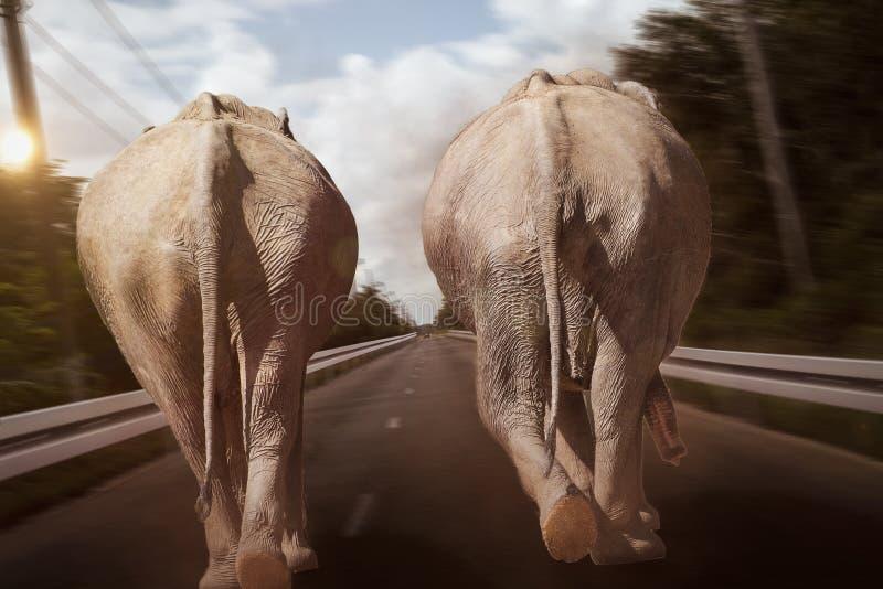 Elephant race. Duel between two old lorries stock photo