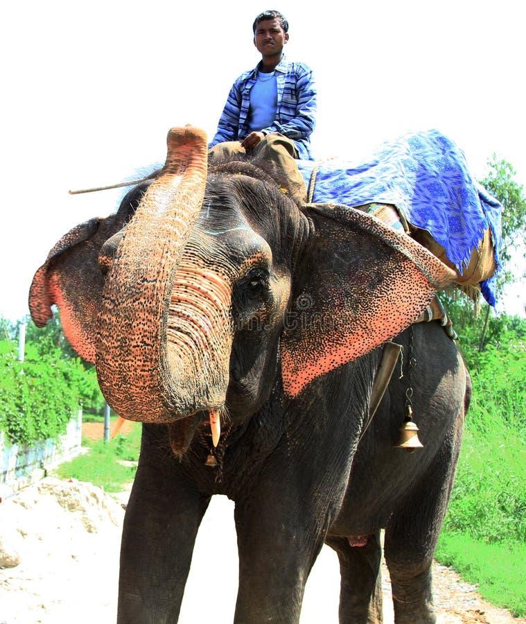 Download Elephant rider stock photo. Image of animal, huge, elephant - 21038532