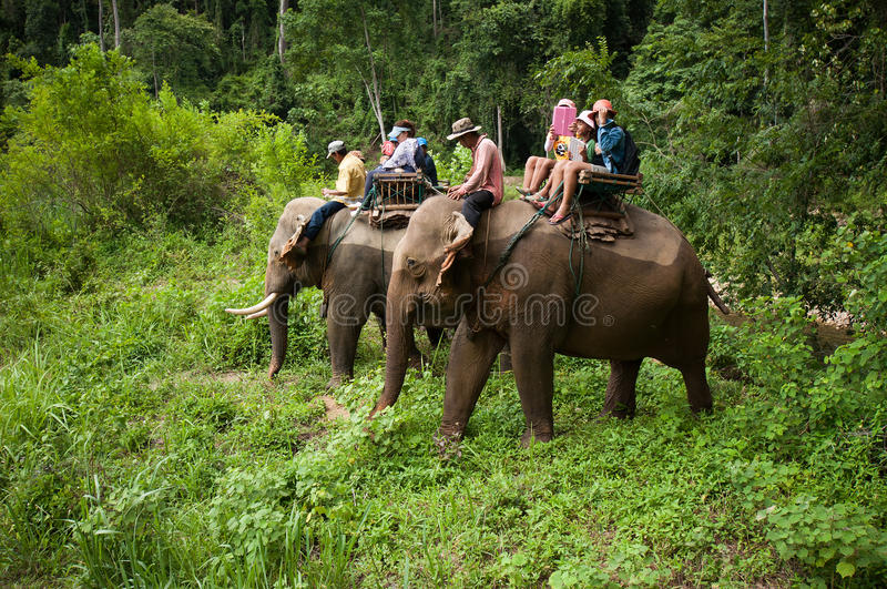 Elephant riding royalty free stock images