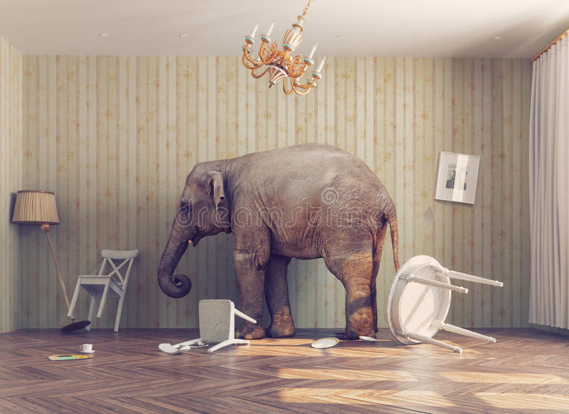 A elephant in a room. A elephant calm in a room. photo combinated concept
