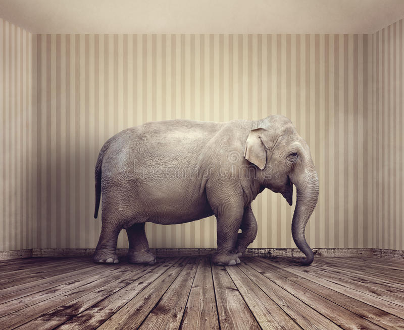Elephant in the room stock image