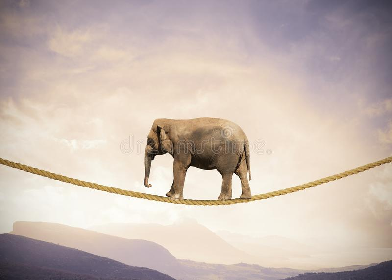 Elephant on a rope. Concept of difficulty in business with elephant on a rope royalty free stock image