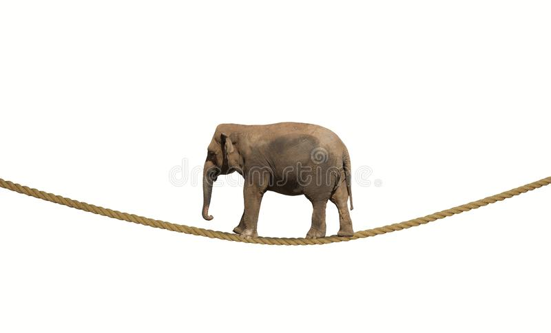 Elephant on a rope. Concept of difficulty in business with elephant on a rope stock image