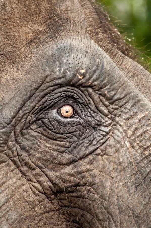 Download Elephant's Eye Royalty Free Stock Photos - Image: 25883238