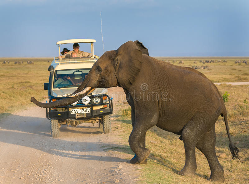 Elephant safari in Amboseli National Park, Kenya stock photos