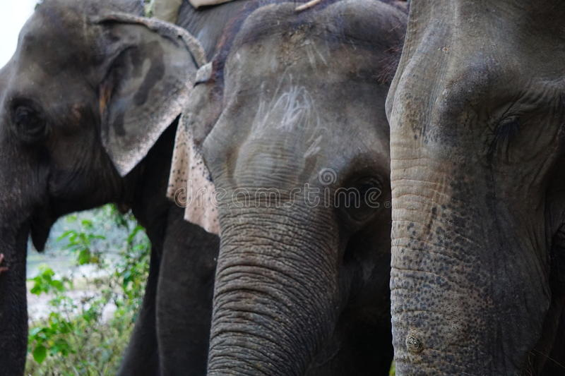 Elephant Safari royalty free stock photos