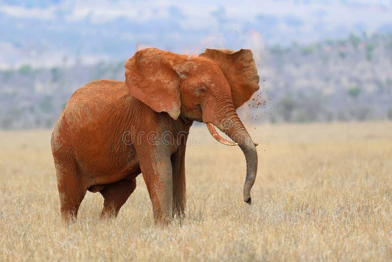 Elephant on savannah in Africa stock photo