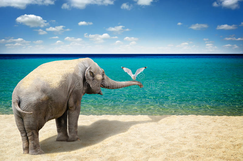 Elephant and seagull on the beach. Seagull on the trunk of friendly elephant, by the sea royalty free stock photos