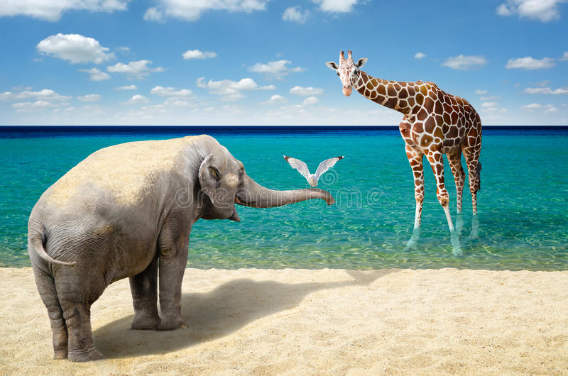 Elephant, seagull and giraffe at the beach. Seagull on elephant's trunk at the beach with giraffe in the background royalty free stock photography