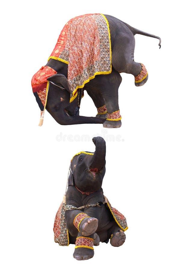 Elephant show. In chiang mai night safari royalty free stock photography