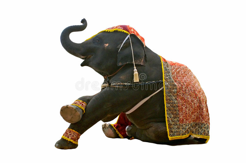 Elephant show. In chiang mai night safari stock images