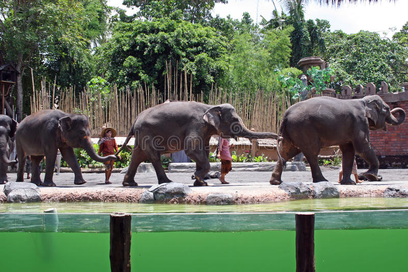 Elephant show in Bali, Indonesia. Elephant show in Bali park, Indonesia royalty free stock images