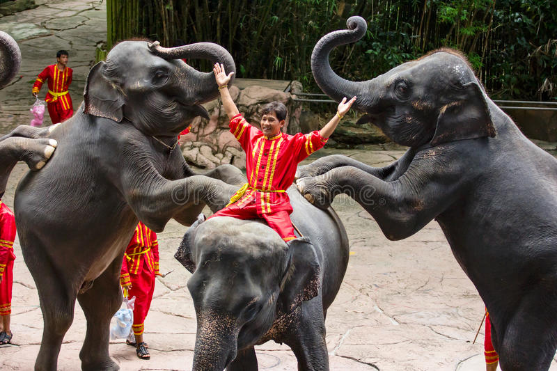 An Elephant show. BANGKOK, THAILAND - JUN 16: An Elephant show at Safari world on Jun 16, 2013 in Bangkok, Thailand royalty free stock image