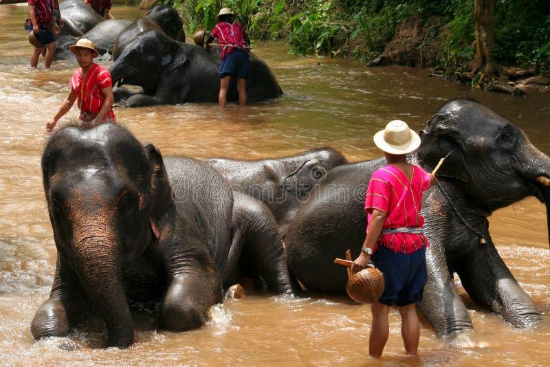 Elephant show. CHIANGMAI, THAILAND-AUGUST 12 2008 : elephant show at maesa elephant camp. Maerim district, chiangmai, thailand stock photo