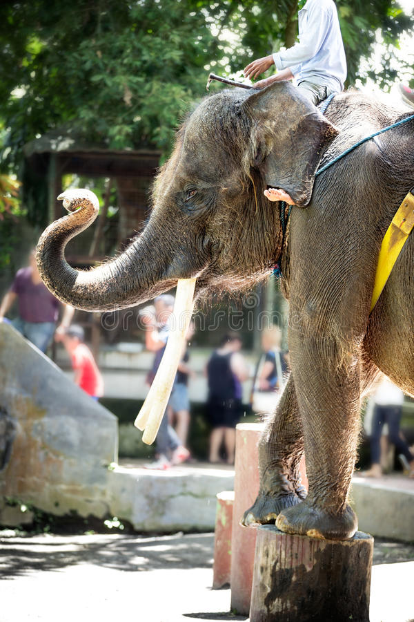 Elephant show. Indonesia, performing on street stock photography