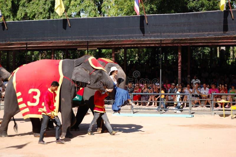 Elephant show in Nong Nooch tropical garden. PATTAYA, THAILAND - SEPTEMBER 7: The famous elephant show in Nong Nooch tropical garden on September 7, 2010 in stock photo