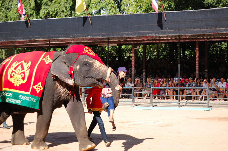 The elephant show in Nong Nooch tropical garden. PATTAYA, THAILAND - SEPTEMBER 7: The famous elephant show in Nong Nooch tropical garden on September 7, 2010 in royalty free stock photography