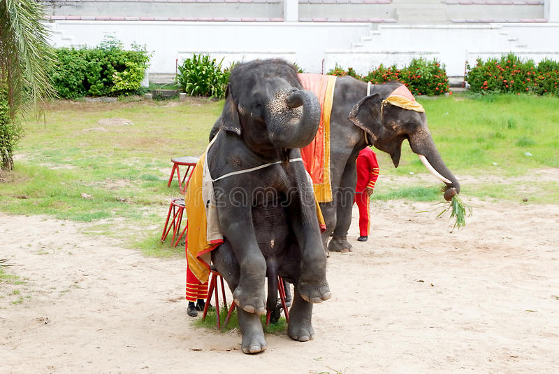 Elephant Show. In zoo Thailand stock photo