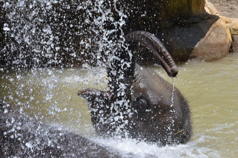 Download Elephant Shower Stock Images - Image: 20197564