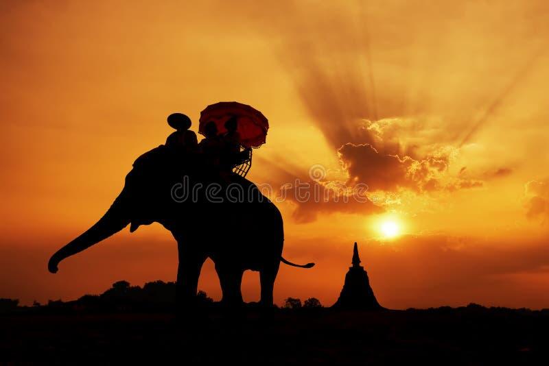 Elephant silhouette royalty free stock photo