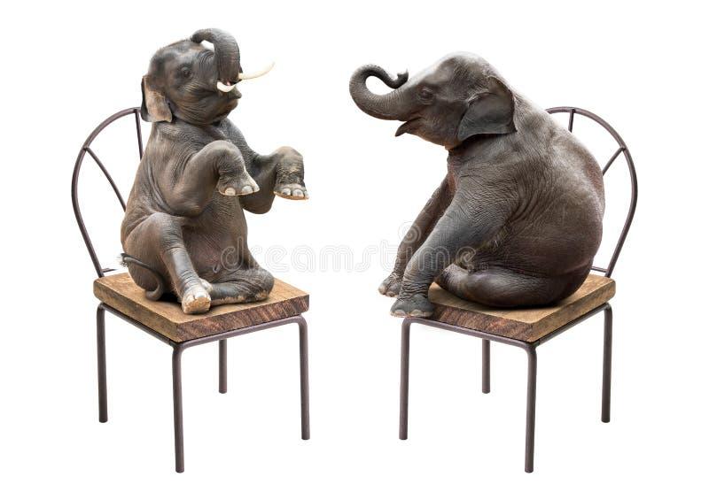 Elephant sitting on chair stock photos