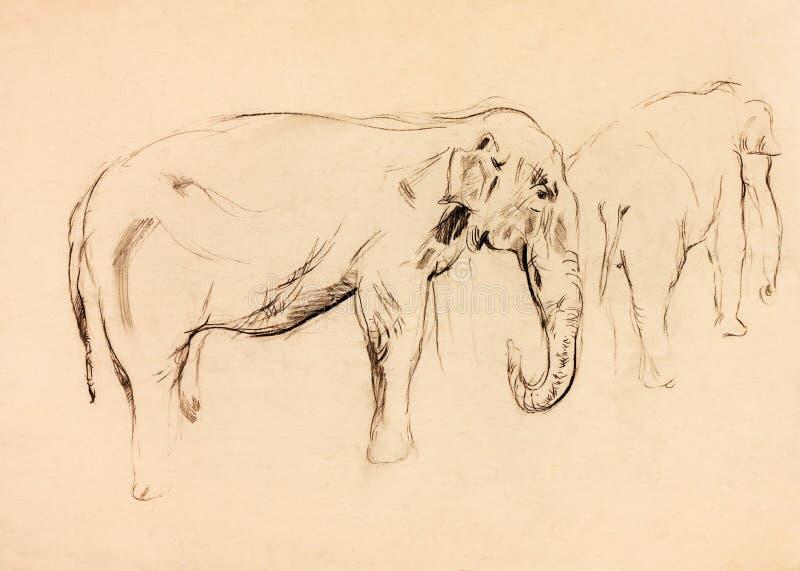 Elephant Sketch Royalty Free Stock Photo