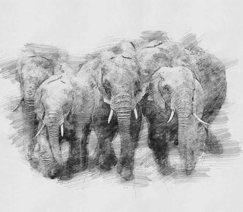 Elephant. Sketch with pencil royalty free illustration