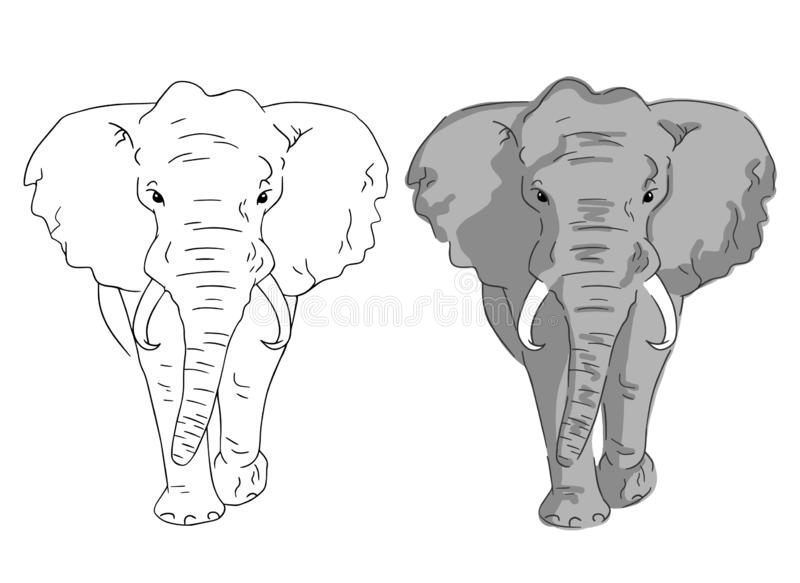 Elephant sketches in color and lines. Simple elephants on white background. royalty free illustration