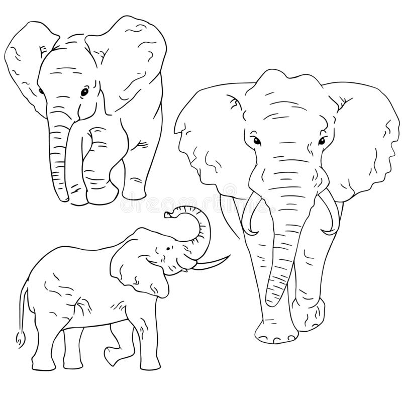 Elephant sketches on white background. Set of sketching animals drawn by freehand. African elephant sketch drawing vector illustration
