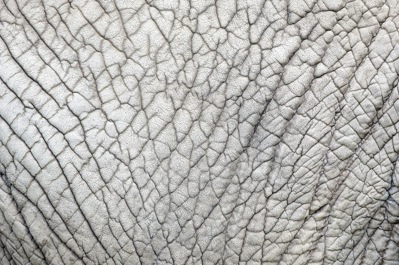 Download Elephant Skin Nature Pattern Stock Photo - Image: 53706238