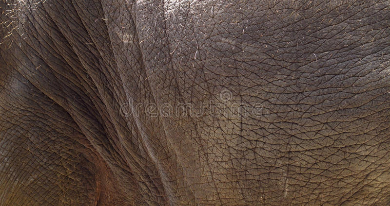 Elephant skin,texture royalty free stock photo