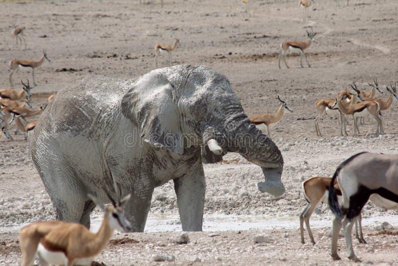 Elephant Splashing stock photo