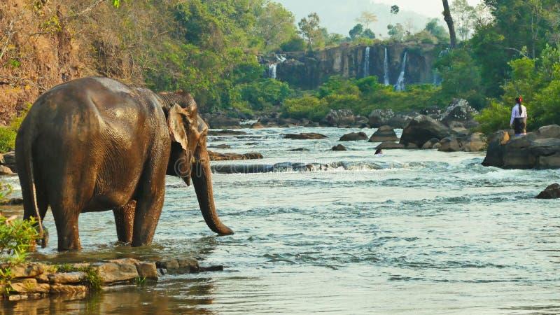 Elephant spraying water; Laos Bolavenplateau stock photos