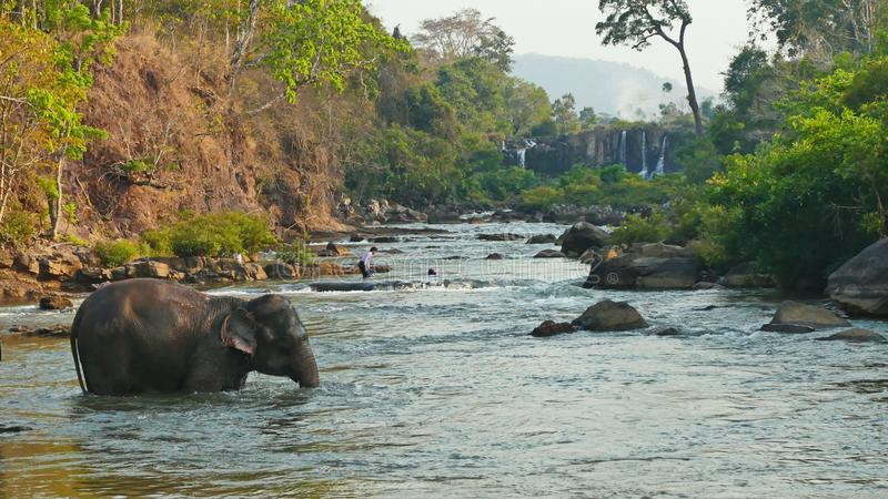 Elephant spraying water; Laos Bolavenplateau royalty free stock photo