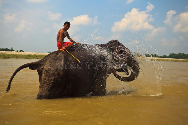 Download Elephant Squirting Water In River In Nepal Editorial Image - Image: 16192830