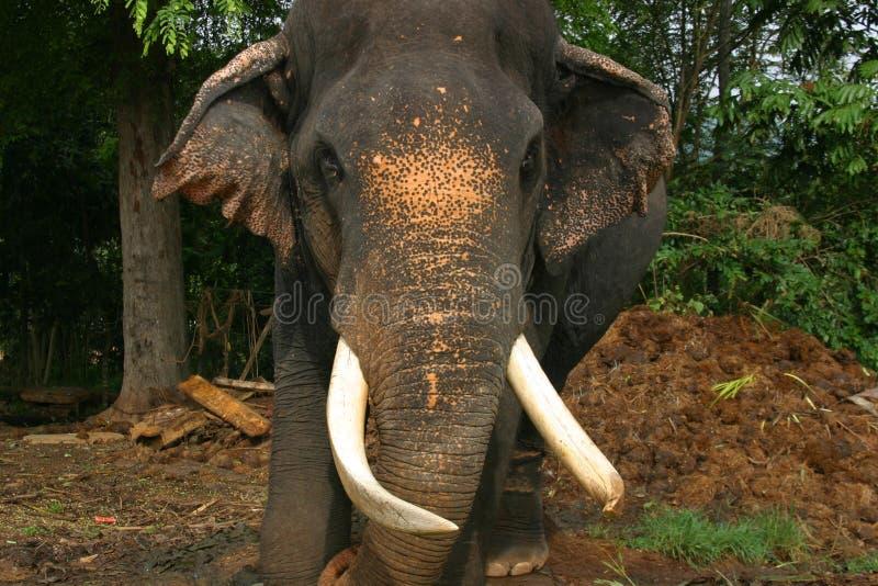 Elephant Sri Lanka stock photos
