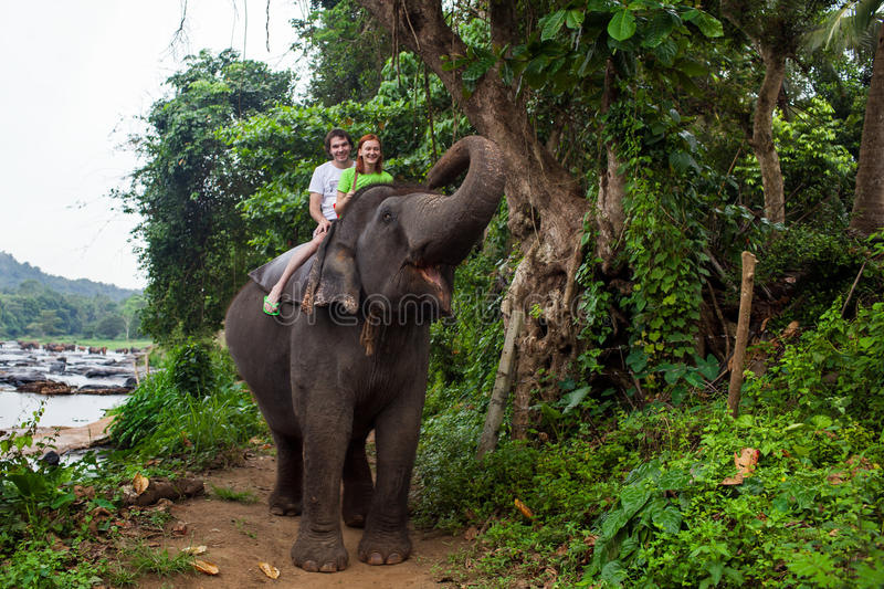 Elephant, Sri Lanka. Young couple tourists to ride on an elephant in Pinnewala, Sri Lanka royalty free stock photography