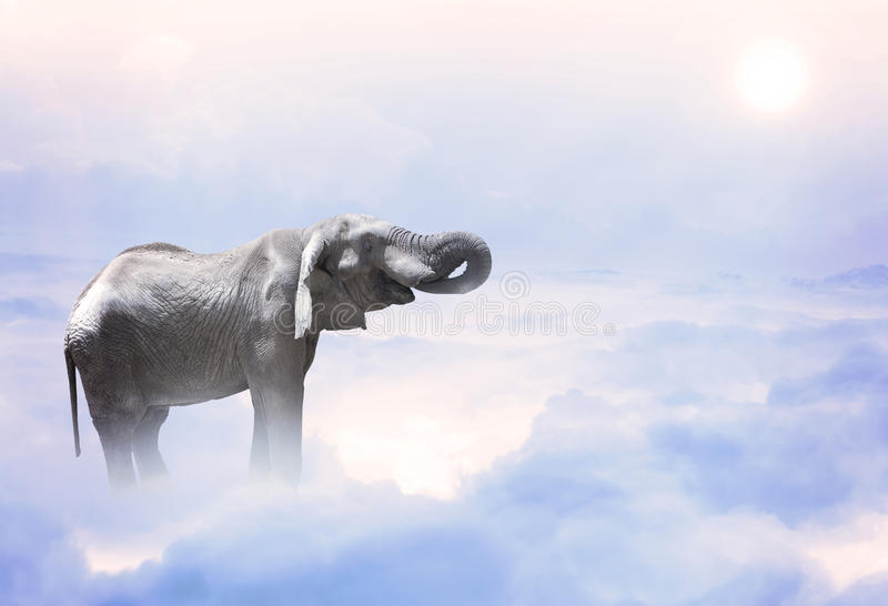 Elephant standing on the clouds royalty free stock photography